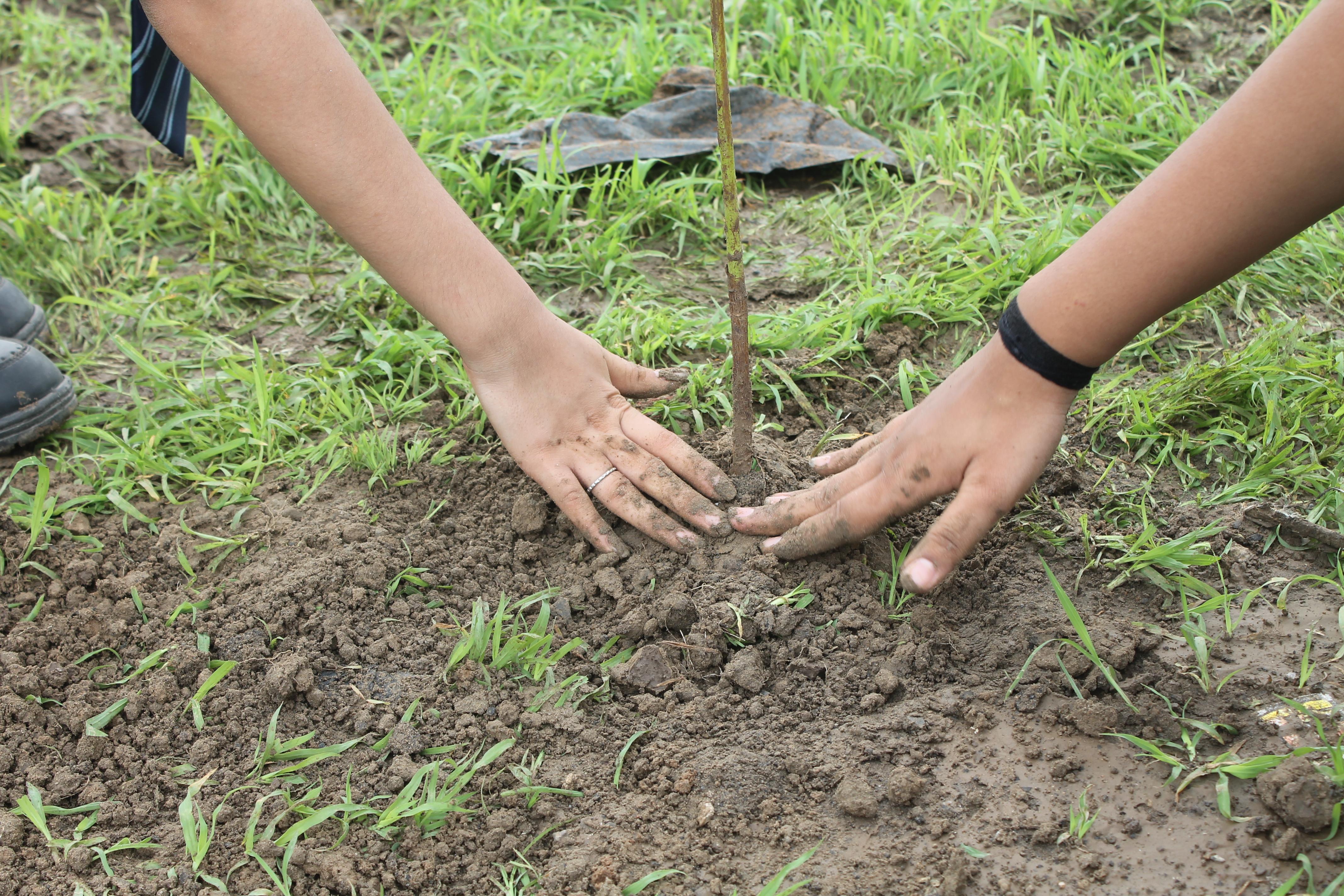Tree Plantation 2019-20